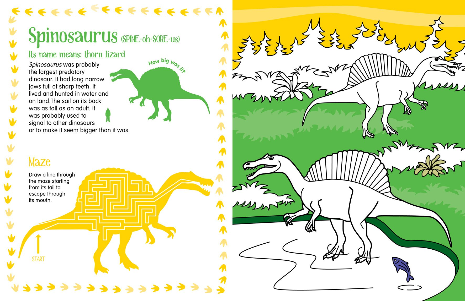 Dinosaur Colouring Book: Natural History Museum: 9780565093075 ...