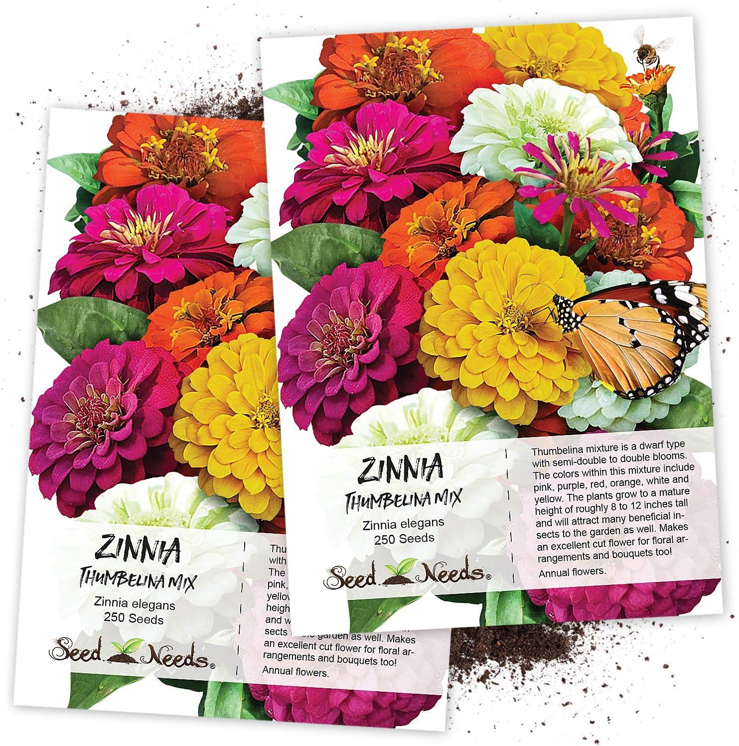 Amazon Com Seed Needs Thumbelina Zinnia Mixture Zinnia Elegans Twin Pack Of 250 Seeds Each Flowering Plants Garden Outdoor