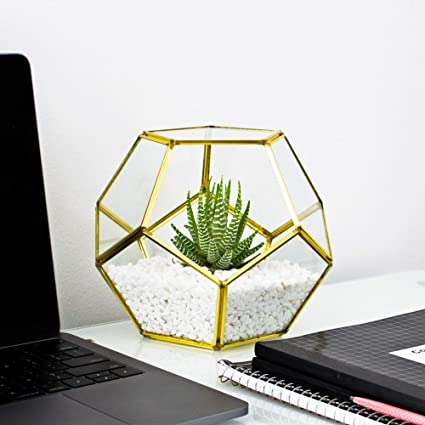 Amazon Com Crebri Glass Geometric Terrarium Gold Succulent