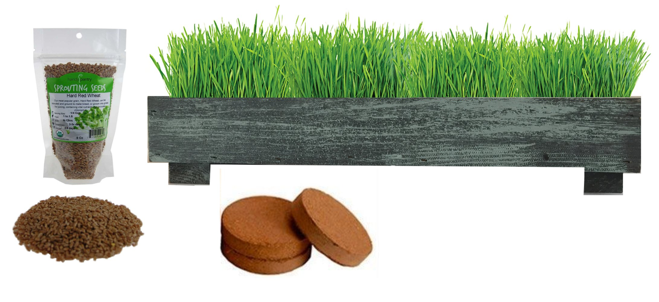 FATPLANTS Complete Organic Wheatgrass Kit in Cedar Planter, Organic Soil, Seeds and Instructions (Large, Coastal Turquoise)