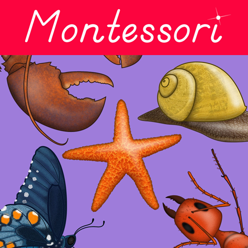 (Montessori Zoology - Parts of Animals - Invertebrates )