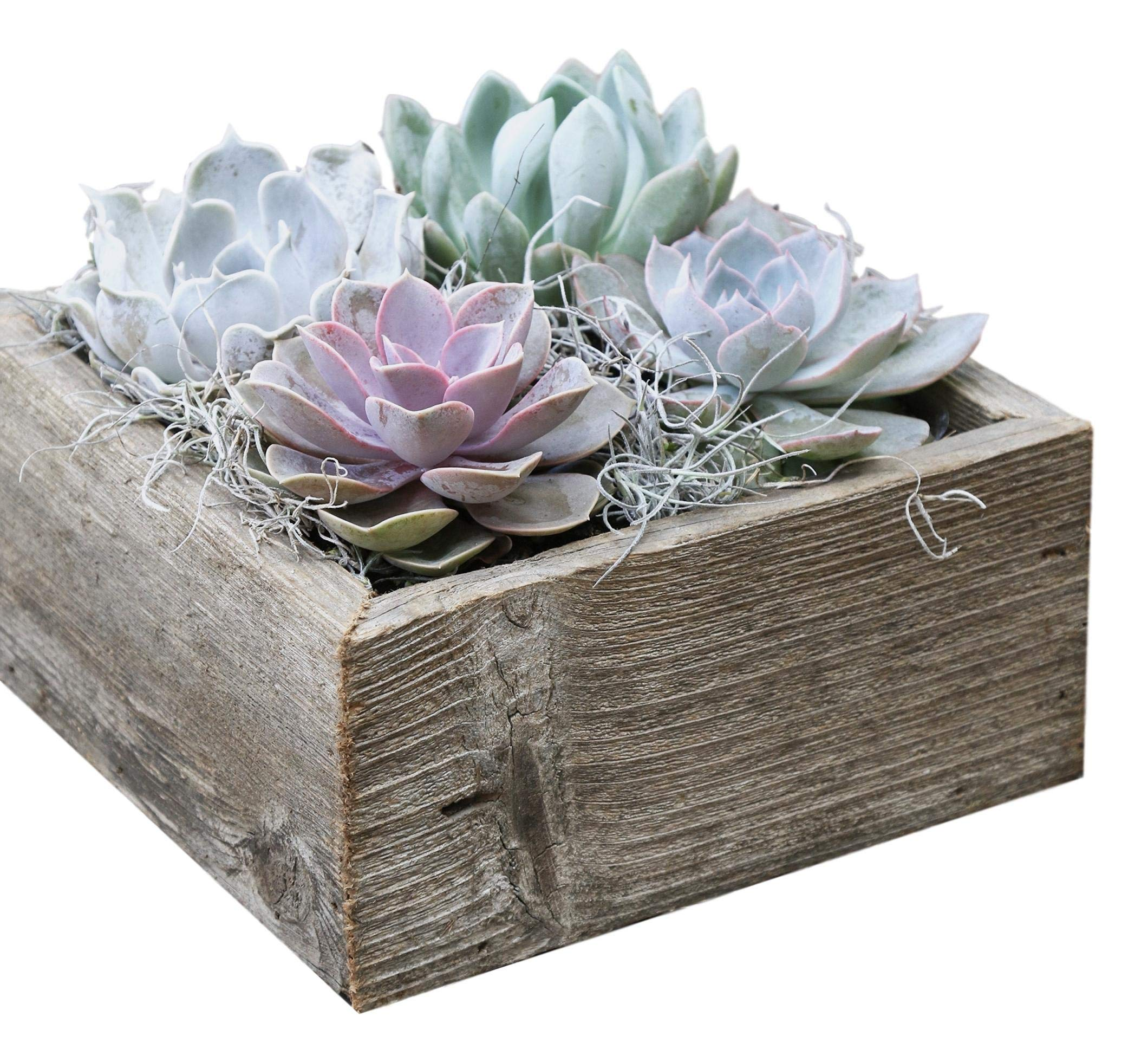 Colorful Succulent Garden in Reclaimed Wood Succulent Planter - 8.5'' Shallow Cube - Ships from Easy to Grow Bulbs, a California Licensed Nursery by Easy to Grow