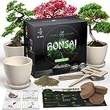 HOME GROWN Bonsai Tree Kit. Bonsai Tree Starter Kit with 4 Seeds Types, incl. Purple Bonsai Tree! Indoor Growing Plant…