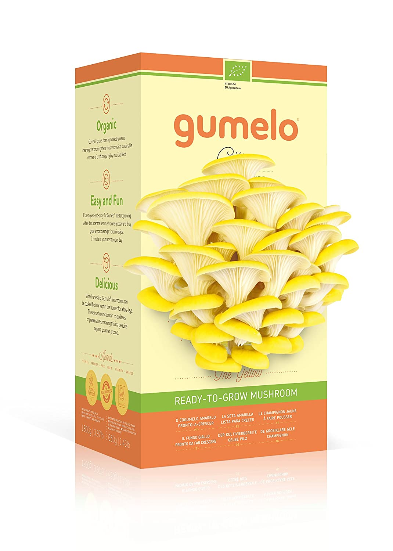 Kit de cultivo (Kit autocultivo) La seta lista para crecer - Pleurotus Ostreatus - Kit de cultivo en casa (champiñón) Mushroom - Amarillo Citrus GUMELO