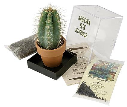 Amazon Grow Your Own Saguaro Cactus Kit Incubator Cactus