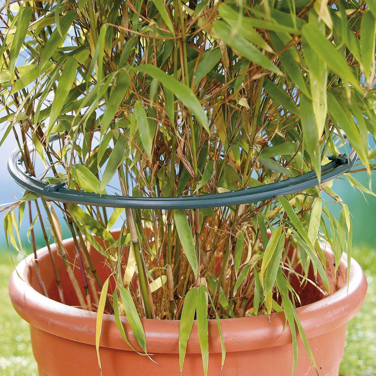 Pflanzen Ringe günstig bestellen