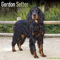 Gordon Setter Calendar 2019