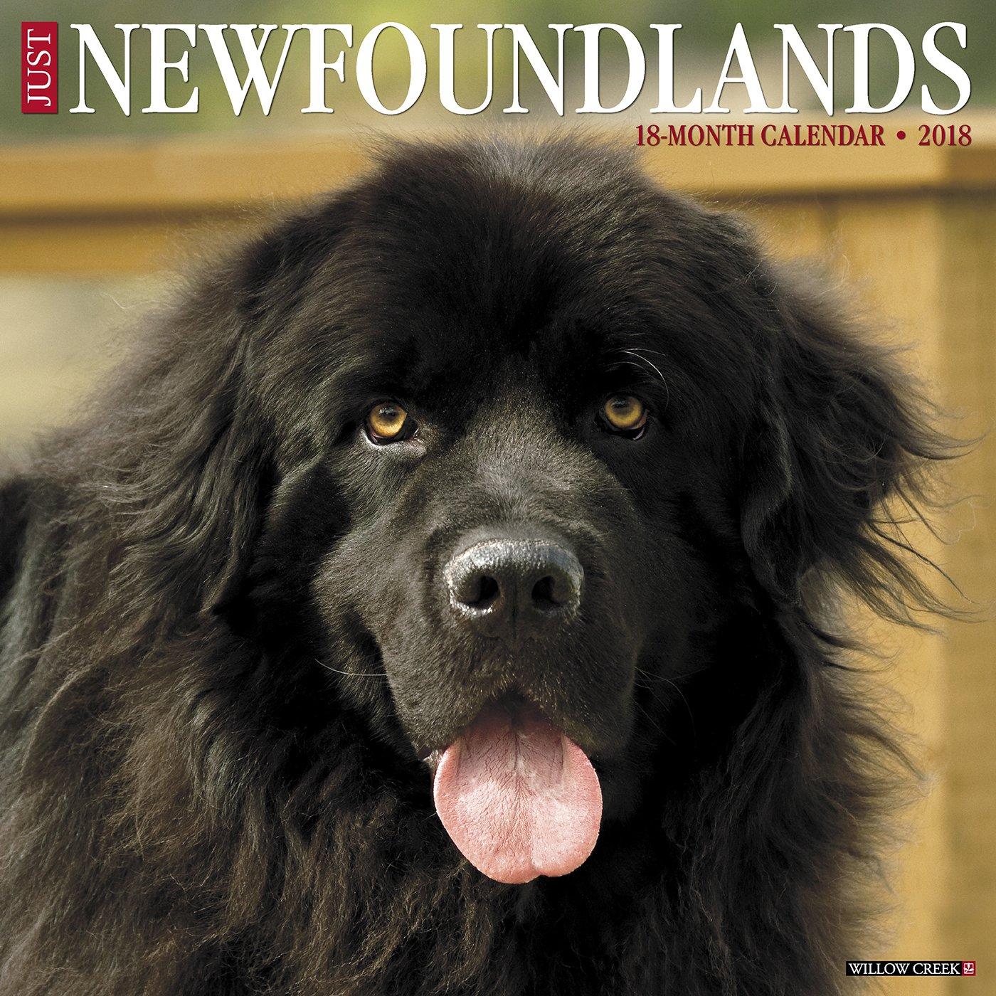 Newfoundlands Calendar Willow Creek Press product image
