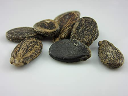 10 Black Coco Bean Seeds