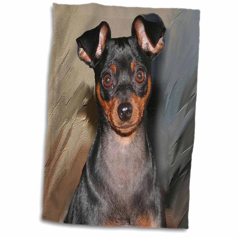 3dRose Dogs Miniature Pinscher TWL/_4555/_1 Miniature Pinscher 15x22 Hand Towel