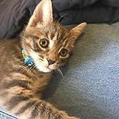 Amazon Com Bayer Advantage Ii Kitten Flea Treatment For