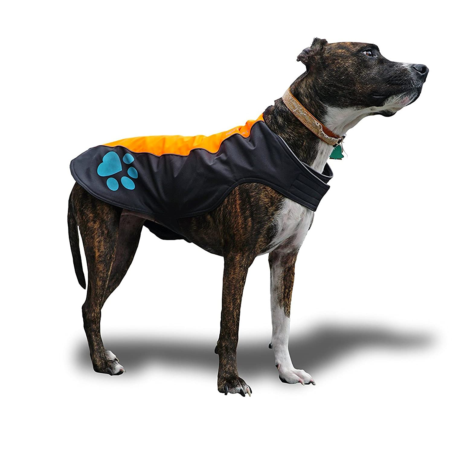 Med Short SafetyPUP XD Dog Coat Waterproof Dog Jacket for Dogs Between 22 lbs and 90 lbs. Hi Visibility Vest with Fleece Inner Lining for Extra Warmth and Predection. Please Take Note of Sizing (Med Short)