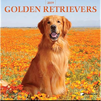 Amazon Com Golden Retriever Puppies Calendar 2019 Dog Breed