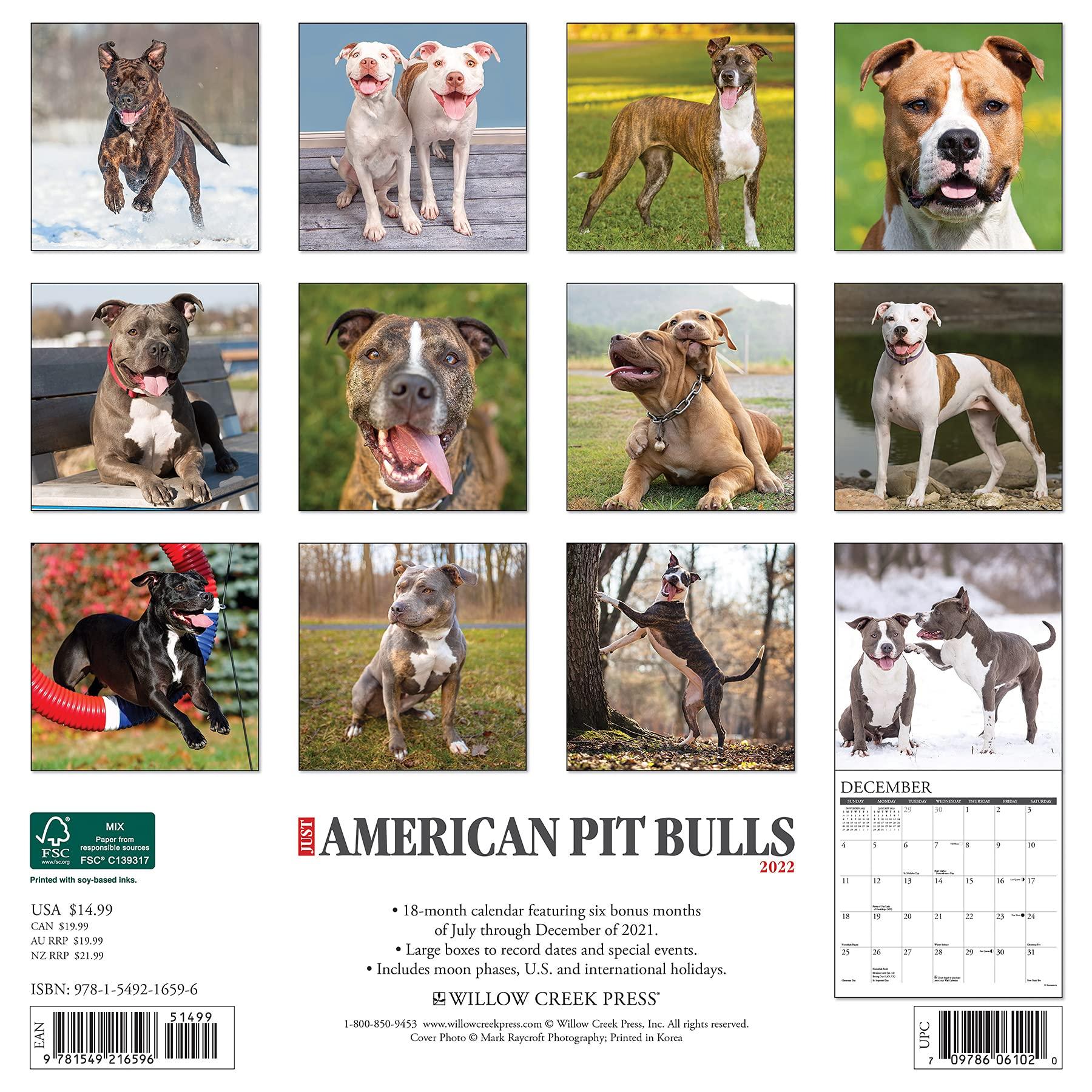 american pit bull calendar