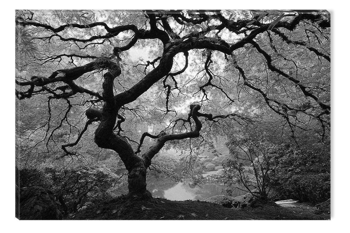 Inspirational Art Black and White Maple Tree Abstract Picture Eco Light Framed Ready to Hang Artwork for Home Decoration (23.62 x 35.43)