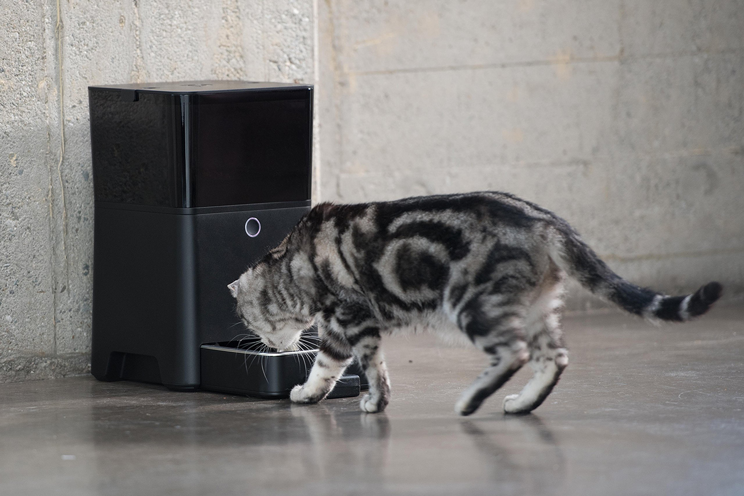Petnet SmartFeeder, Automatic Pet Feeder for Cats and Dogs, Works with Amazon Alexa by Petnet (Image #8)
