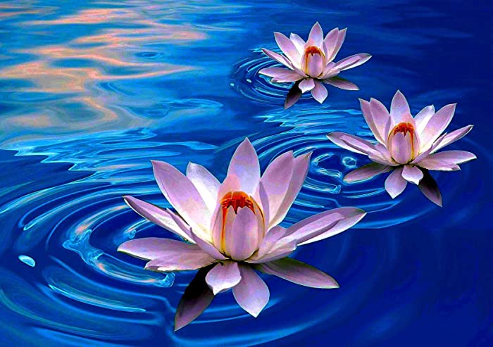 Amazoncom Lotus Flower Poster Blue Print A4 A3 Wall Art Picture