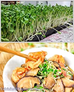 Organic (300 Seeds) Kaiware sprouts-Daikon microgreens-no GMO vegetable Seeds+ Free Thai Food Recipe