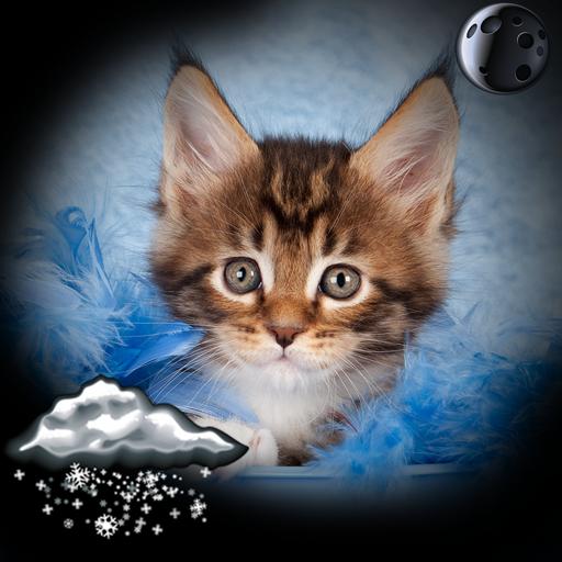 Kittens Clock Weather Widget