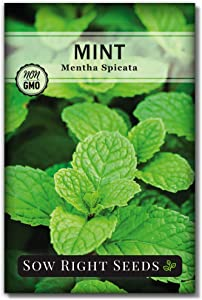 Sow Right Seeds - Mint Seed for Planting - Non-GMO Heirloom Seeds - Instructions to Plant and Grow an Herbal Tea Garden, Indoors or Outdoor; Great Gardening Gift (1)