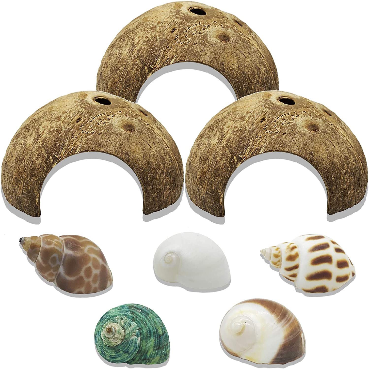 Alpurple 8 PCS Natural Coconut Reptile Hideouts- Natural Turbo Sea Shells Turbo Shells Hermit Crab with Coconut Hide Reptile Hideouts for Beach Home Decor and Wedding Centerpieces