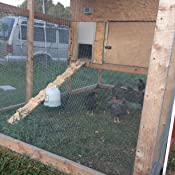 Amazon Com Chickenguard Premium Automatic Chicken Coop