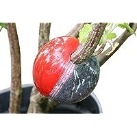 Cutting Globe - Conjunto de propagadores de plantas
