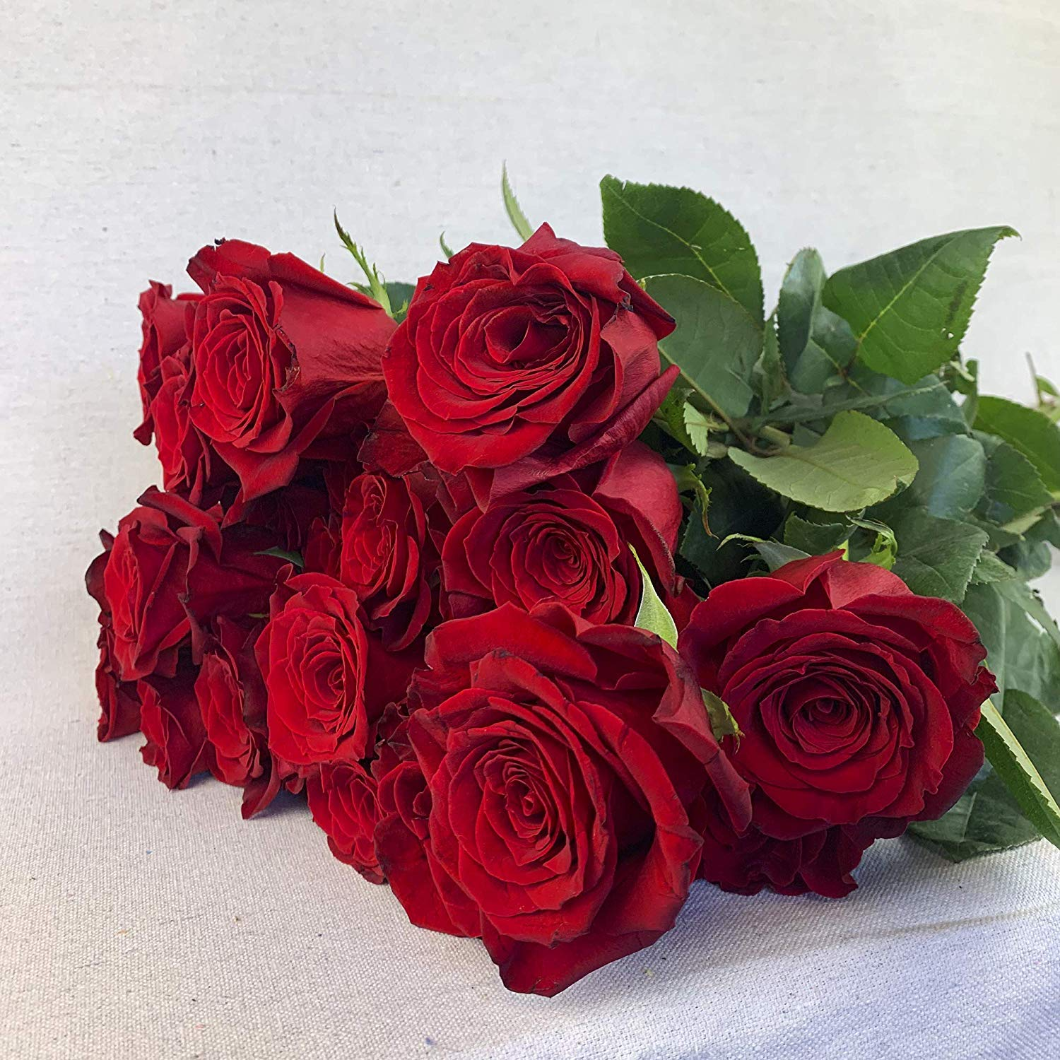Green Choice Flowers - 24 (2 Dozen) Premium Red Fresh Roses with 20 inch Long Stem Farm Fresh Flowers Beautiful Red Rose Flower Cut Per Order Direct from Farm Fast Free Delivery Long Lasting by Greenchoiceflowers (Image #6)
