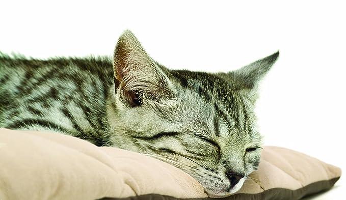 Flectabed Q Petlife Cama térmica para perro/gato, 66 x 50,8 cm