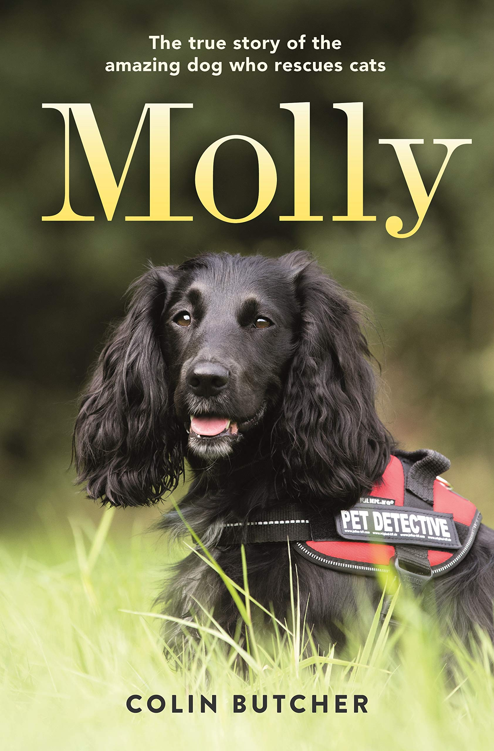 Molly: The True Story of the Amazing Dog Who Rescues Cats by Celadon Books