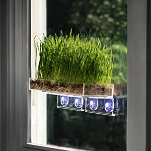 Window Garden Double Veg Ledge Shelf Organic Wheatgrass Kit Bundle (5) -Enough Pre-Measure Seeds, Fiber Soil to Grow 5 Trays on Your Indoor Window. Superfood Healthy Benefits for You and Your Cat.