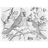 Reeves - Sketching By Number Red Cardinals