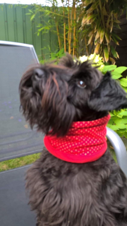 Hundeloop Hundeschlauchschal in rot mit Punkten