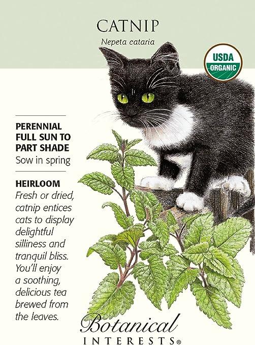 Amazon Com Catnip Seeds 500 Mg Nepeta Certified Organic