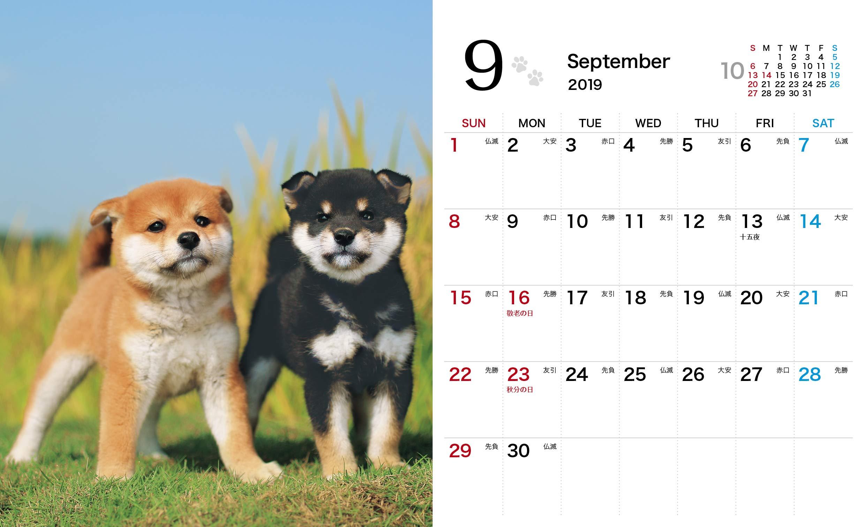 卓上 しばいぬ日和mini インプレスカレンダー2019 森田米雄 本