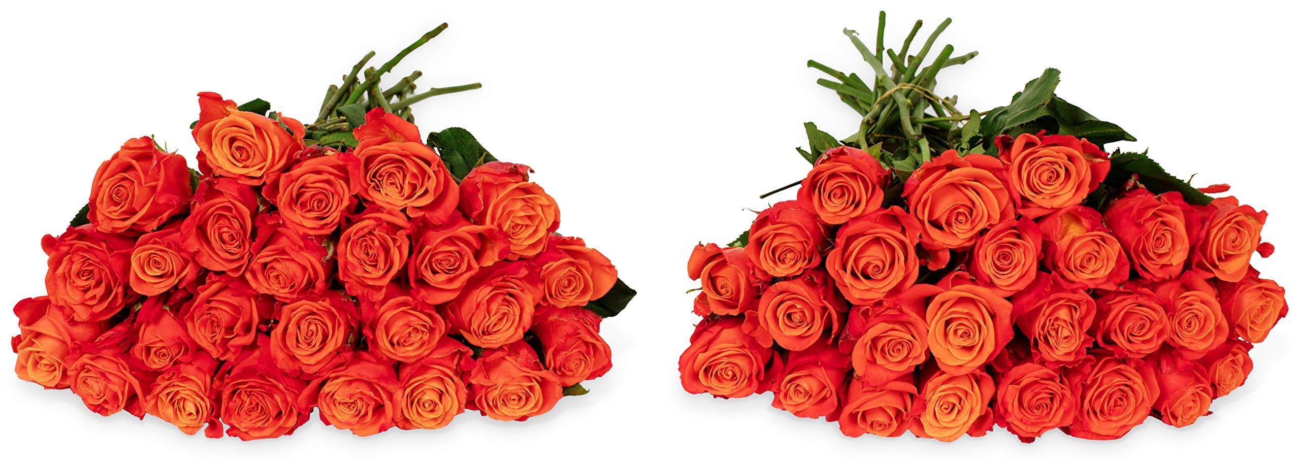 Benchmark Bouquets 50 Orange Roses Farm Direct (Fresh Cut Flowers)