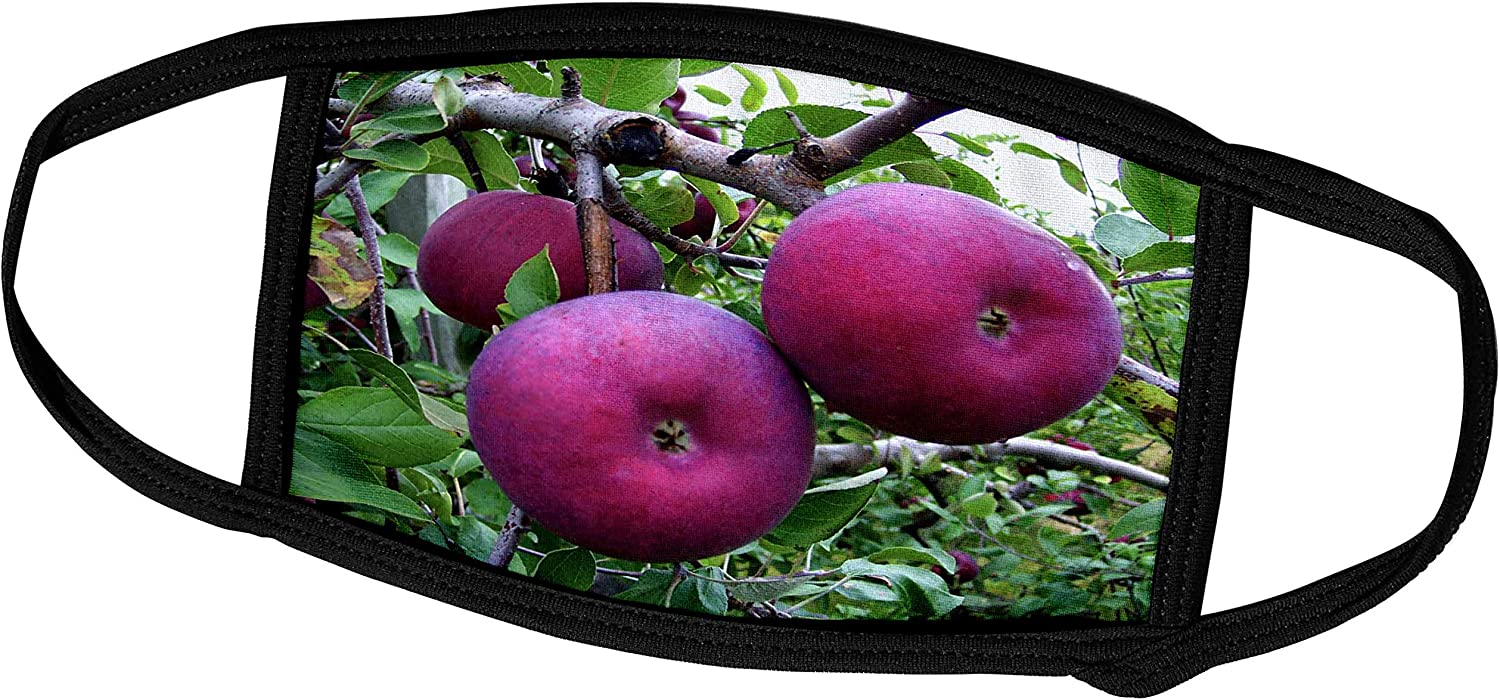 3dRose TDSwhite – Farm Food - Juicy Red Apples Orchard Tree Branch - Face Masks (fm_296895_1)