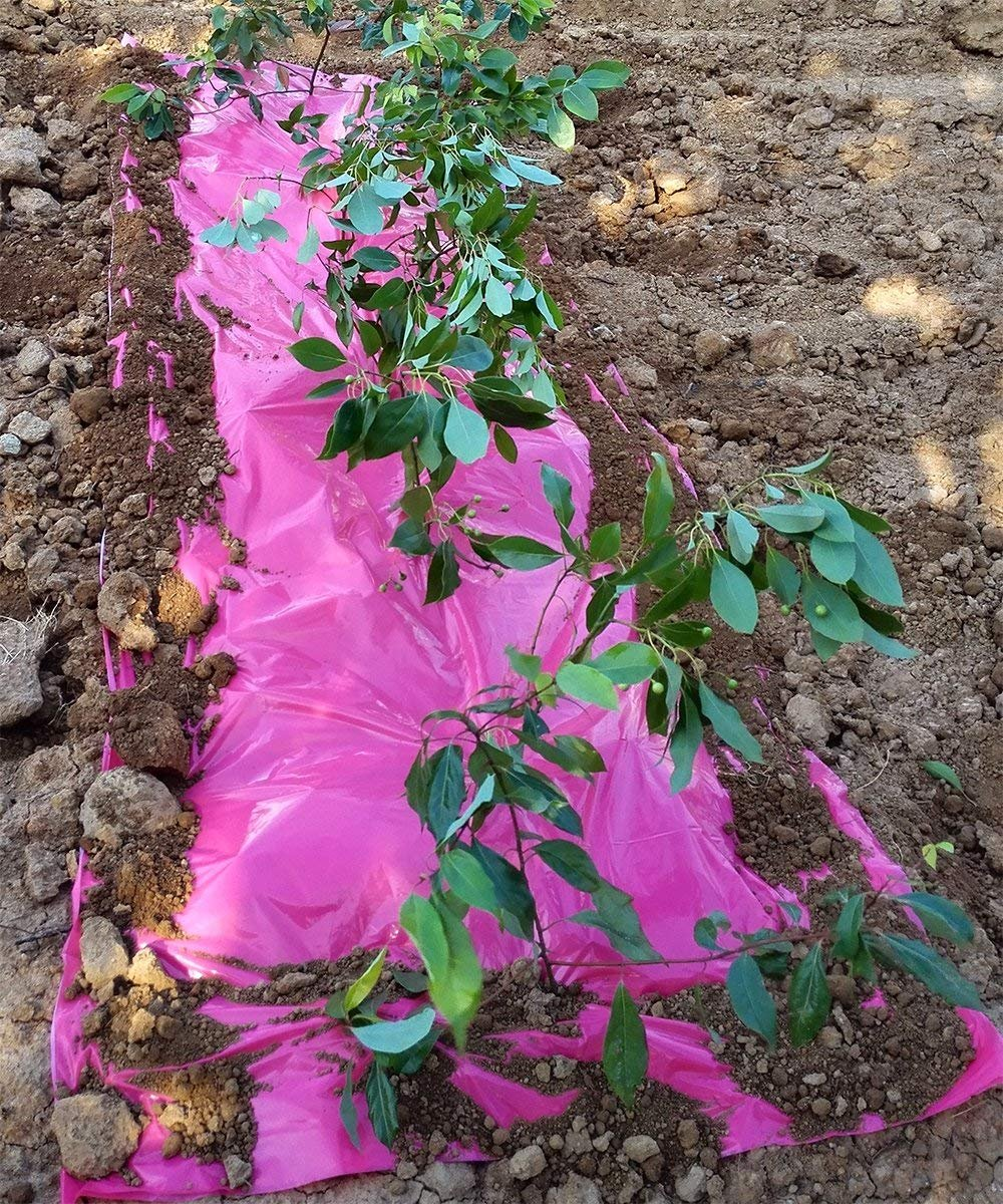 Eco.Fabric Weed Barrier Pink Mulch Plastic Film for Garden Plant Cover 5 x 50ft 1.2Mil