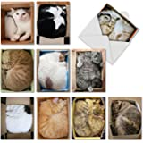 10 Cat-Themed Note Cards with Envelopes, Assorted 'Square Cats' Blank Greeting Cards, All-Occasion Kitten Stationery for…