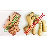 Organic fresh ginger from Pure (1)