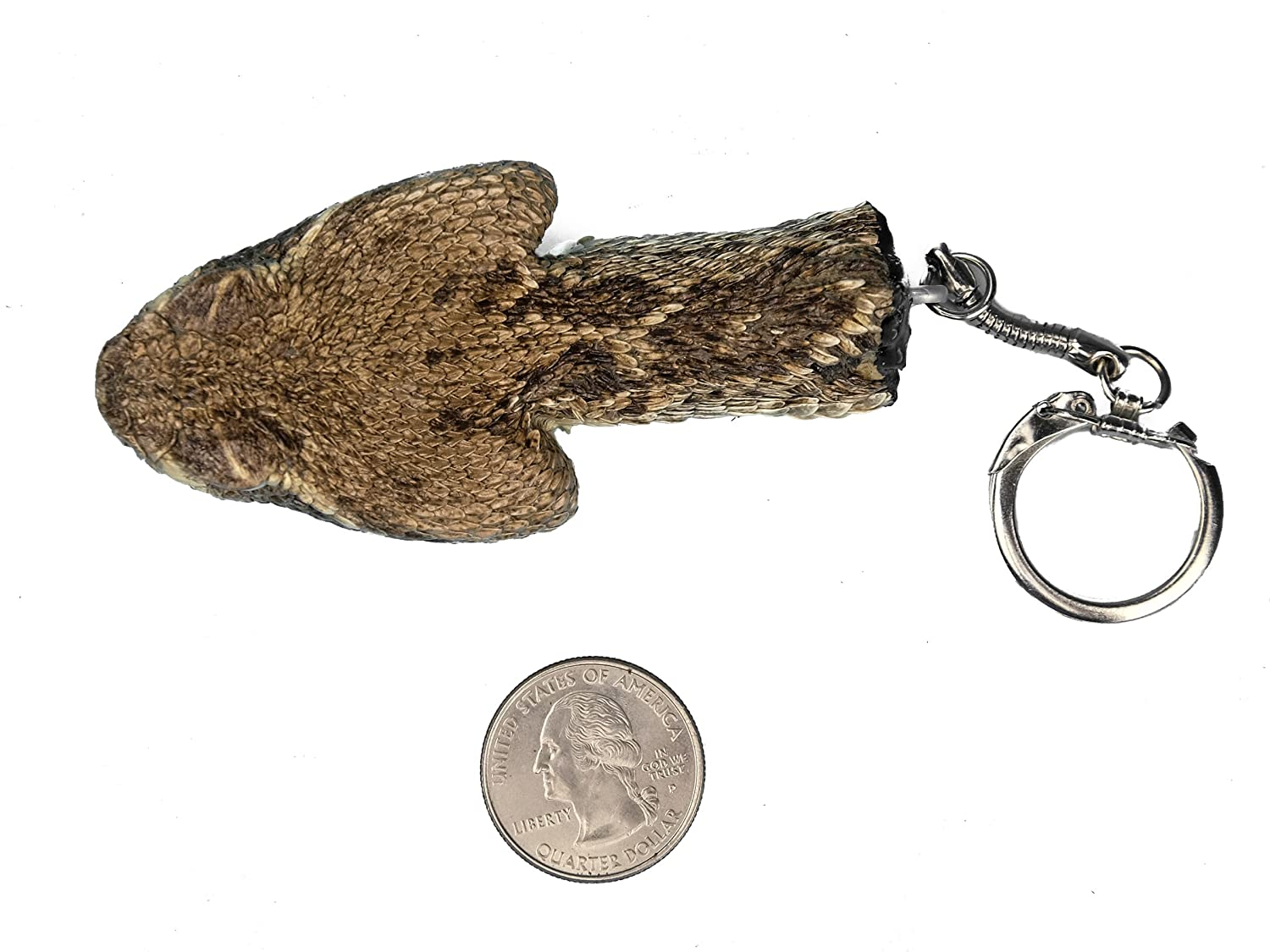 Amazon.com: Real Rattlesnake Head Keychain : Closed Mouth ...