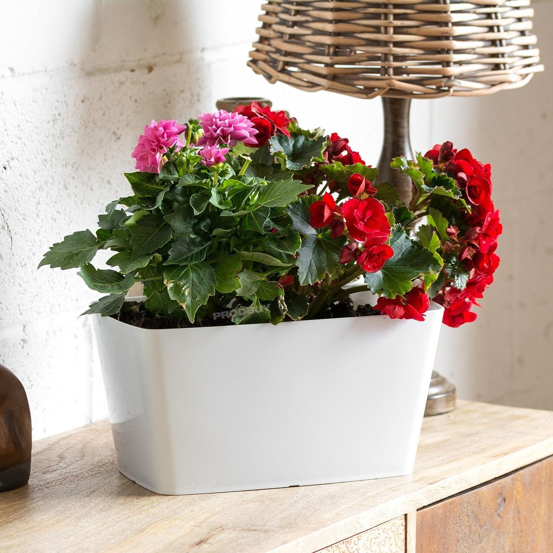 2 x WHITE Rectangular 30cm Plastic Plant Pot Cover Troughs ProdBuy Limited