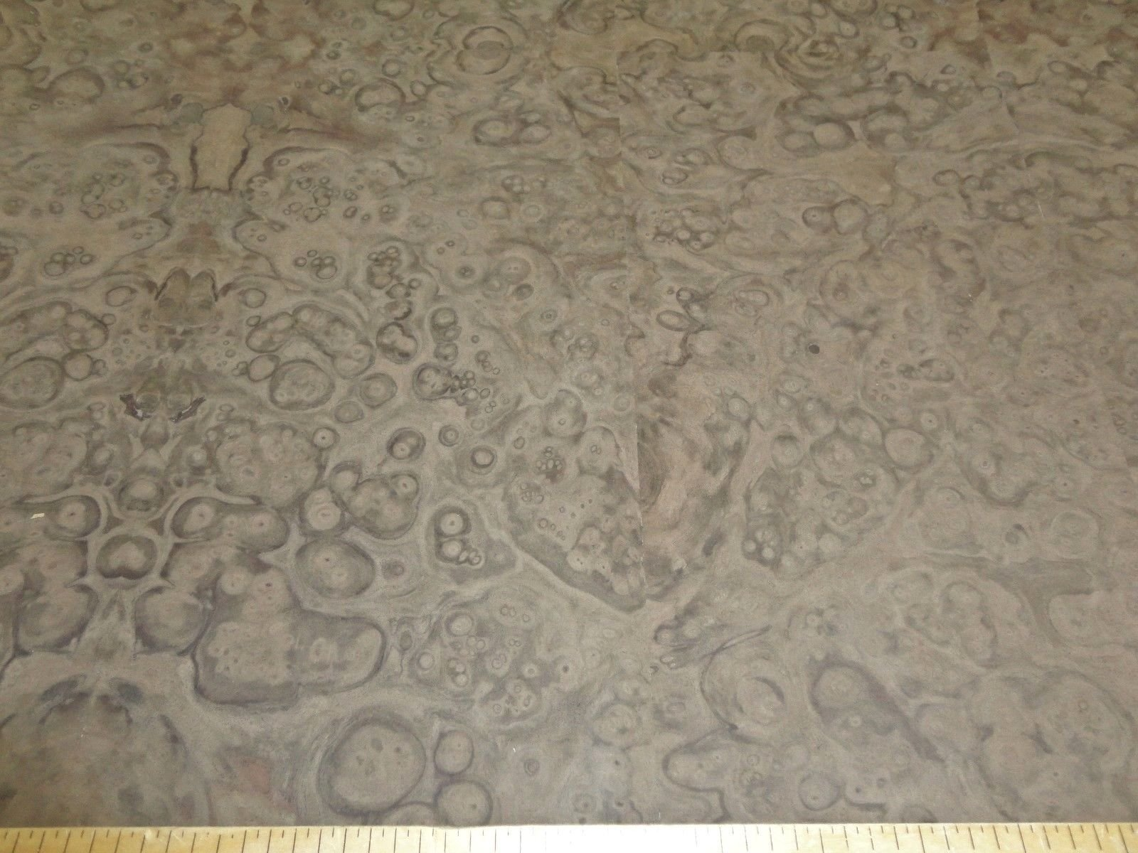 Walnut Burl wood veneer 24'' x 32'' with PSA peel stick adhesive AAA grade quality