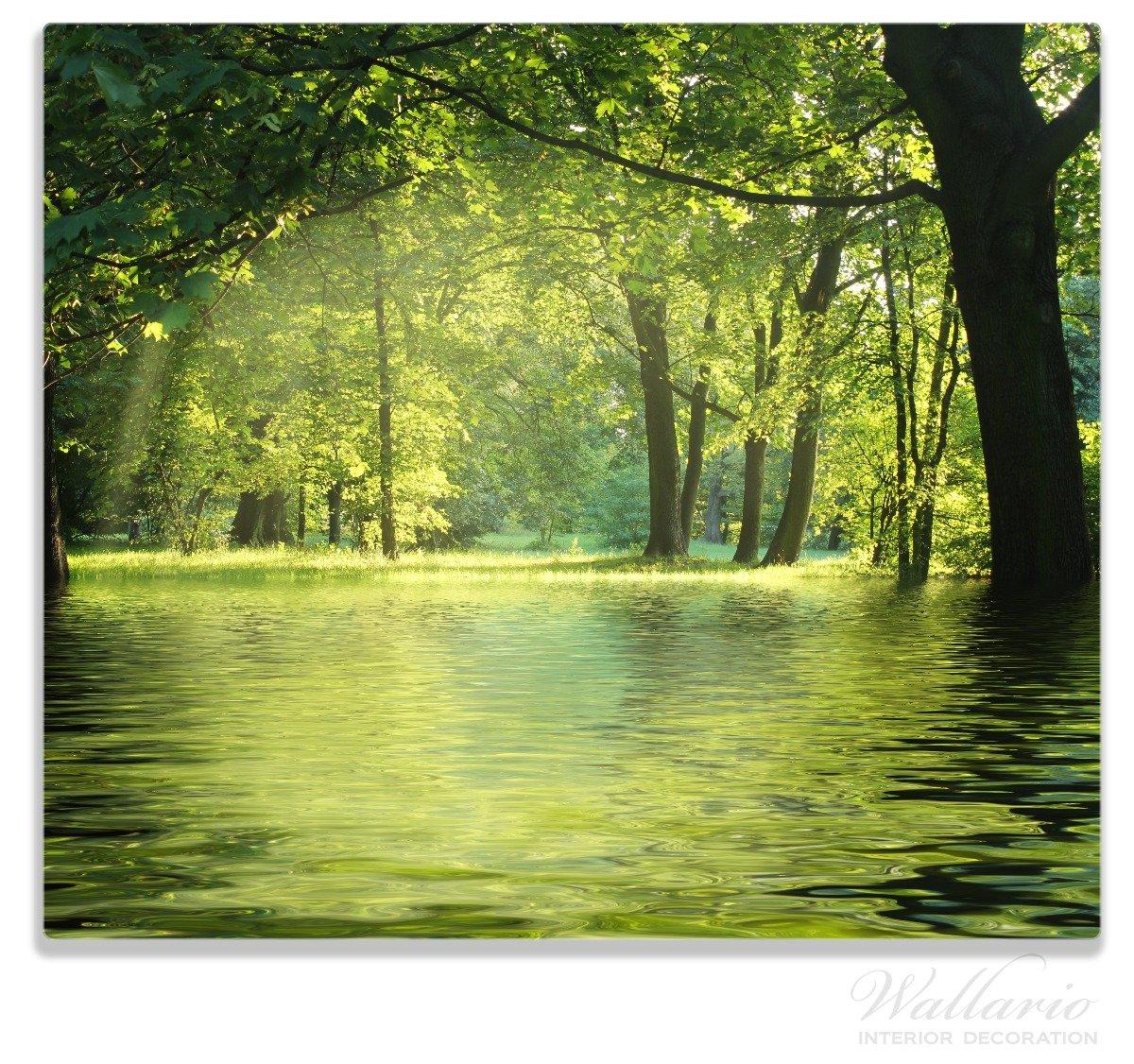 Wallario Herdabdeckplatte//Spritzschutz aus Glas Idyllischer See im Wald bei Sonnenschein 1-teilig f/ür Ceran- und Induktionsherde 52x60cm