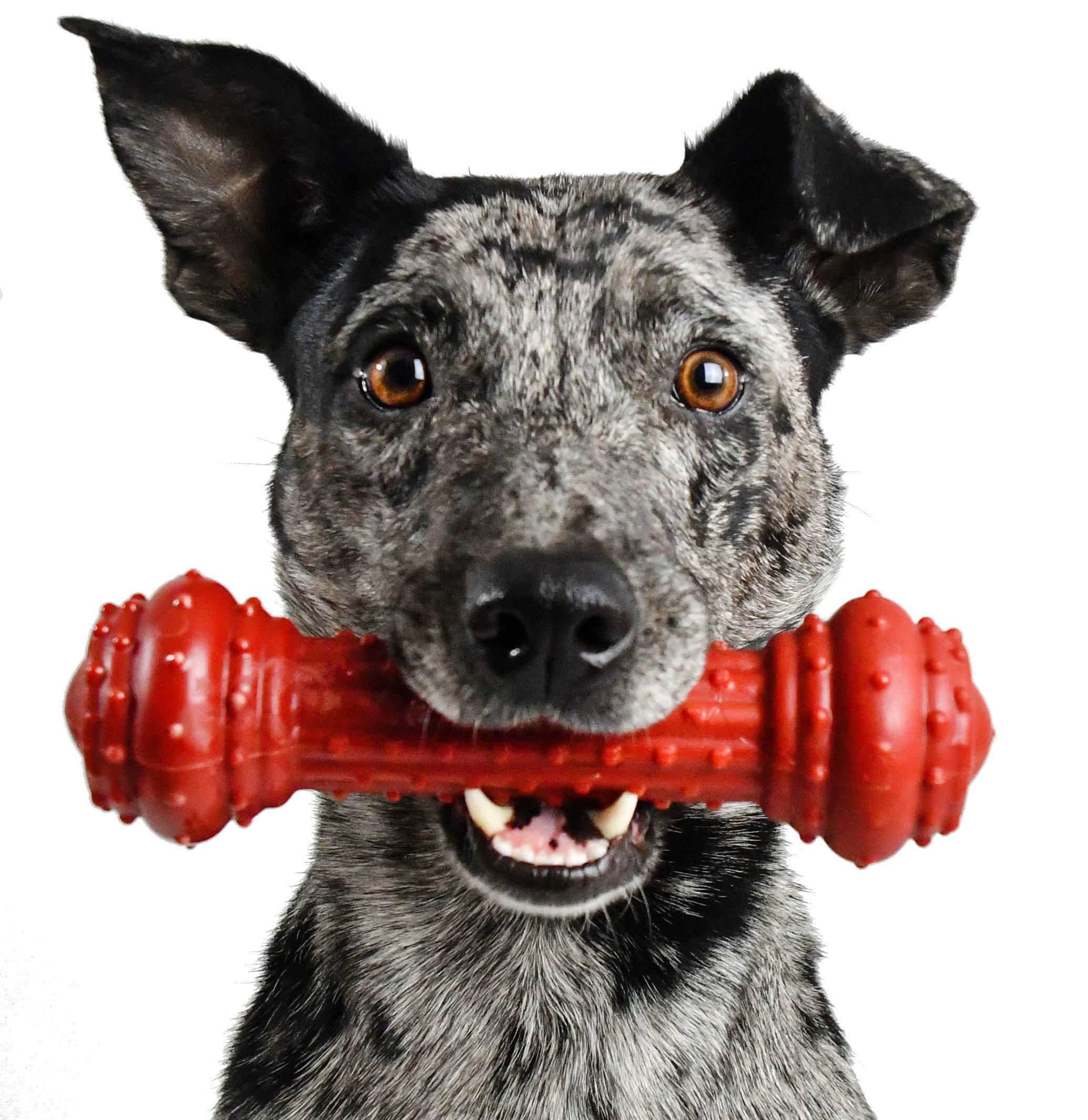 Pet Qwerks Dog Chew Toy