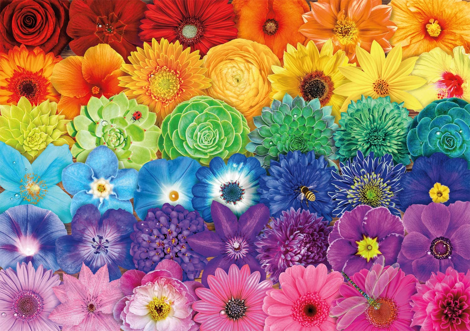 Buffalo Games - Flower Spectrum - 300 Large Piece Jigsaw Puzzle