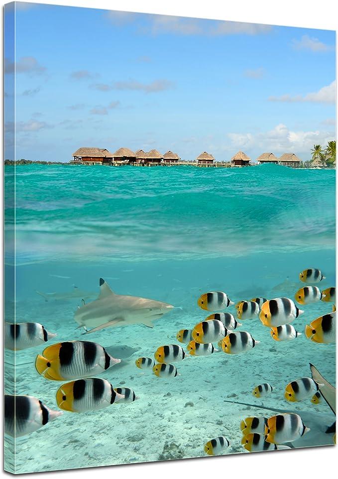 Bilderdepot24 Cuadros en Lienzo Tiburón y Pescados en Bora Bora - Polinesia Francesa - 50x70 cm 1 Pieza - Enmarcado Listo Bastidor Imagen. Directamente Desde el Fabricante: Amazon.es: Hogar