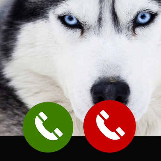 Fake call from Siberian husky
