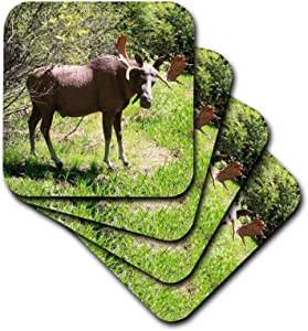 3dRose TDSwhite – Miscellaneous Photography - Moose Statue Nature Scene - set of 8 Coasters - Soft (cst_321886_2)