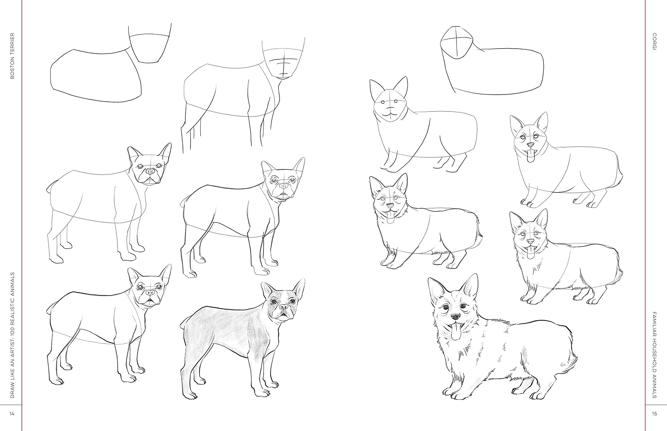 How To Draw A Small Dog Draw A Realistic Dog Draw A Dog Step By